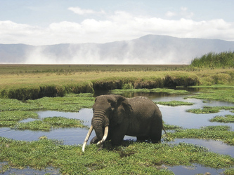 Im Ngorongoro Krater, ©Tanganyika Expeditions
