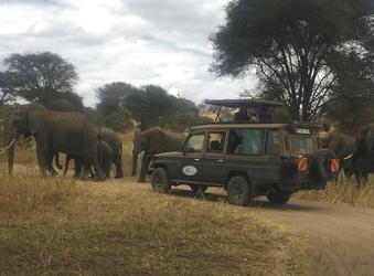Große Elefantenherden kreuzen den Weg