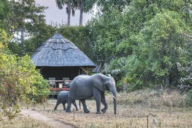 Elefanten vor einem Safarizelt