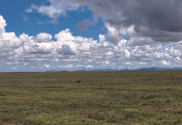 Grenzenlose Weite - die Serengeti