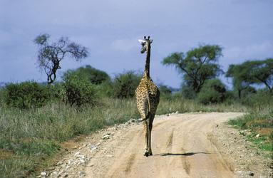 ©Markus Walter, DIAMIR Erlebnisreisen; Straßenverkehr in Tansania