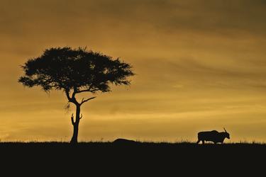 Abendstimmung in der Masai Mara, ©Thomas König