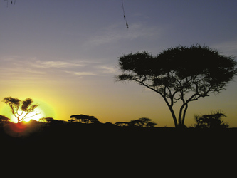 Sonnenaufgang im Selous Game Reserve