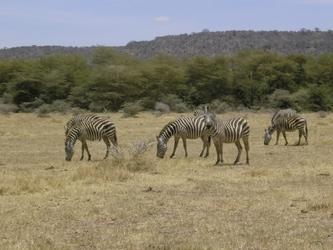 Im unberührten Selous Game Reserve