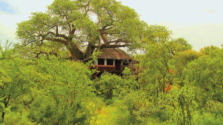 Baumhaus im Tarangire Treetops, ©Elewana SkySafari