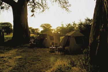 Romantik unterm Baobab
