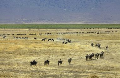 Endlose Herden, ©Jörg Ehrlich, DIAMIR Erlebnisreisen