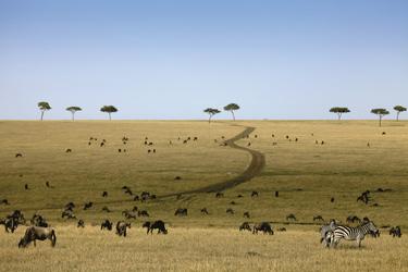 Tierherden in der Serengeti