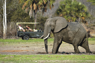 Safari im Selous Nationalpark
