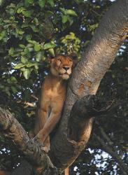 ©Great Lakes Safaris; Guter Aussichtspunkt