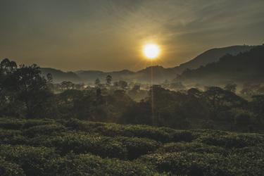 Stimmung im Bwindi Nationalpark