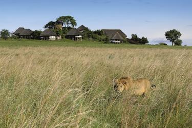 ©Jörg Ehrlich, DIAMIR Erlebnisreisen; Perfekt getarnter Löwe