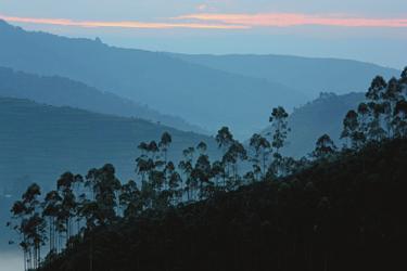 ©Thomas Kimmel, DIAMIR Erlebnisreisen; Abendstimmung im Bwindi Nationalpark