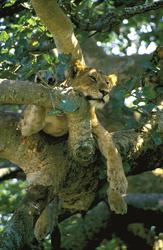 ©Thomas Kimmel, DIAMIR; Im Queen Elizabeth Nationalpark