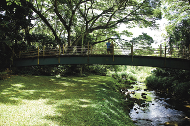 McBryde Gardens, Kauai
