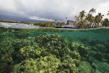 Unterwasserwelt von Big Island