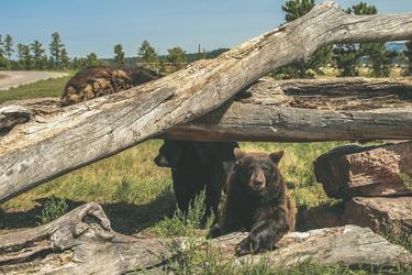 Bear Country Rapid City