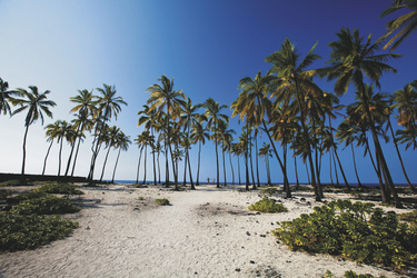 Kokosnuss Hain bei Puuhonua O Honaunau, ©Tor Johnson