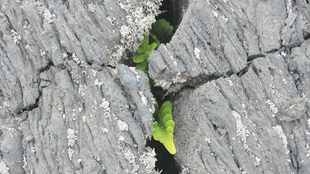 Pflanzen unter Lavaschichten