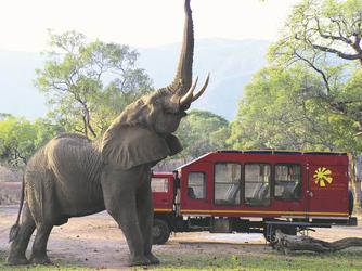 Safari Truck mit Elefant, ©Shwan Waring