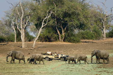 Safari im South Luangwa