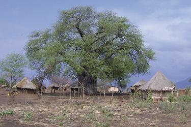 Dorf mit Baobab, ©Shamiso Tours
