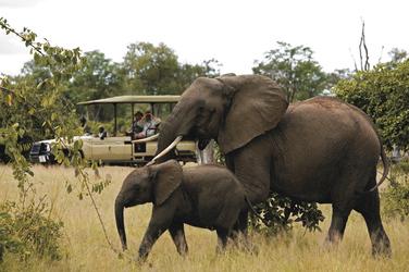 Elefanten Pirschfahrt  in der Süd Luangwa
