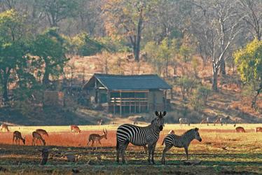 Zebras und Springböcke im Süd Luangwa Nationalpark