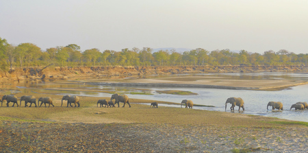 Elefantenherde im South Luangwa Nationalpark