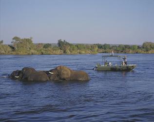 Elefanten im Zambezi