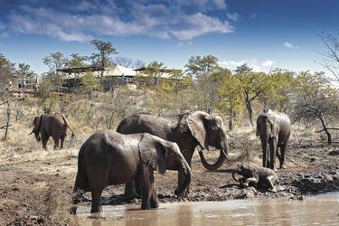 Elefantenherde beim Elephant Camp, ©David_Rogers