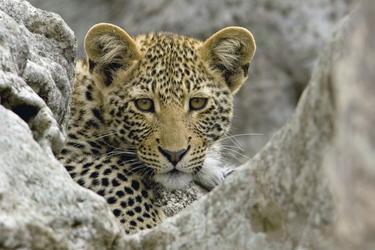 Tierbeobachtung im Matopo NP