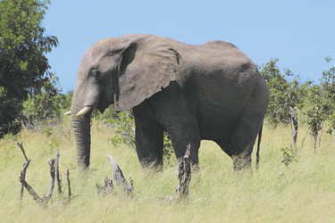 Auf Safari im Hwange NP, ©Elephant´s Eye Safari Lodge