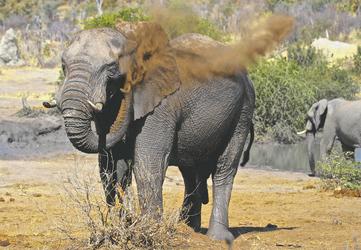 Auf Safari im Hwange Nationalpark, ©Imvelo Safari Lodges